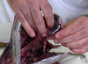 removal_of_tuna_eye_from_tuna_head